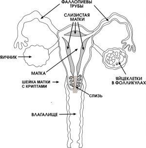 spermatozoidi-podvizhnost-to-chego-zavisit